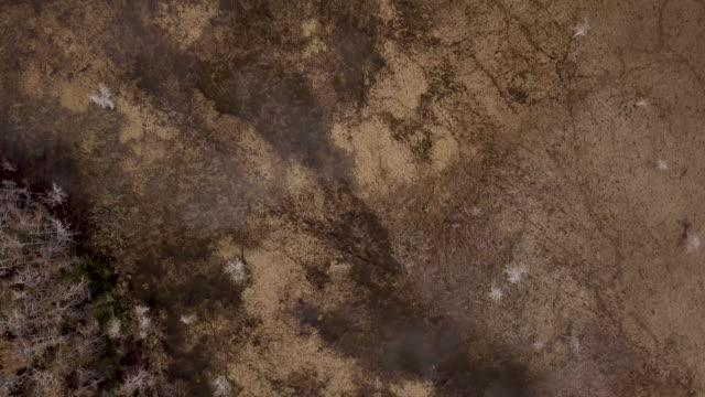 florida everglades aerial view - alligator stock videos & royalty-free footage