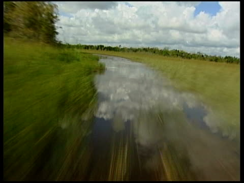 everglades airboat tour passengers and captain on airboat as along through marshlands / more tracking shots of landscape and wildlife as airboat... - parco nazionale delle everglades video stock e b–roll