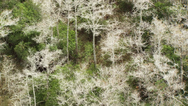 usa, florida : everglades white trees - miami dade county stock videos and b-roll footage