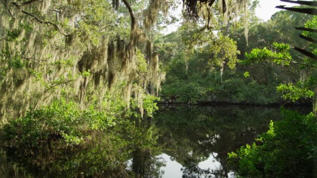 vídeos y material grabado en eventos de stock de usa, florida, oscar scherer st park, trees over pond - pantano zona húmeda