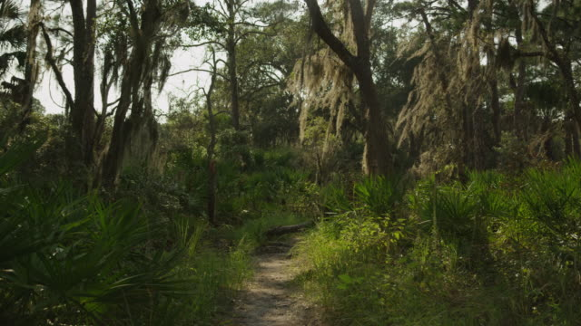 usa, florida, oscar scherer state park, trail in forest - florida us state stock videos and b-roll footage