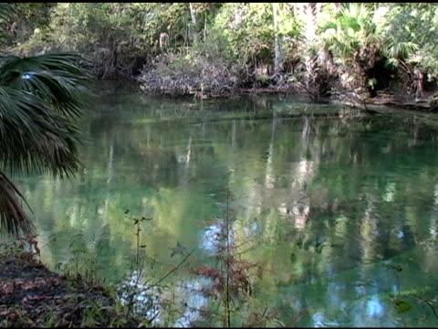 florida spring - aquifer stock videos & royalty-free footage
