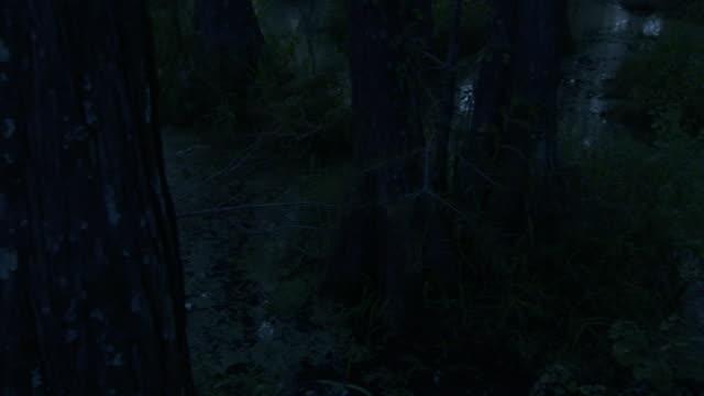 a florida swamp reflects trees at night. - 低湿地点の映像素材/bロール
