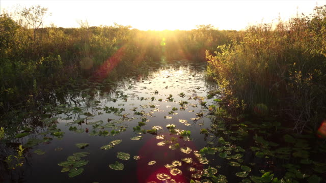 florida wetlands landscape at sunset in everglades national park - everglades national park stock videos & royalty-free footage