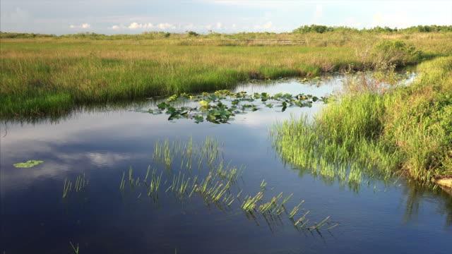 vídeos de stock, filmes e b-roll de florida wetlands landscape in everglades national park - pântano salgado