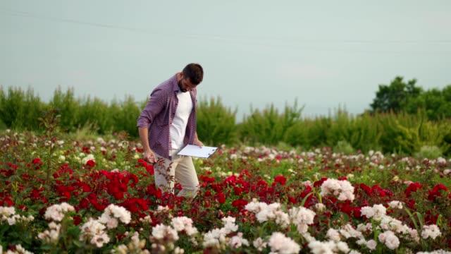 vídeos y material grabado en eventos de stock de florista examinando las plántulas de rosas - oficio agrícola