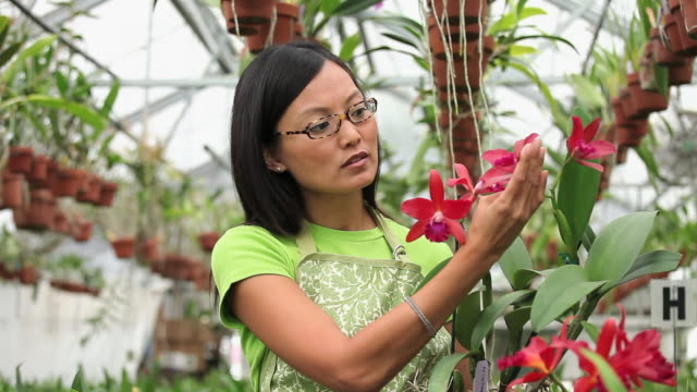 MS Florist in Greenhouse Full of Orchids, Inspecting Plant / Richmond, Virginia, USA