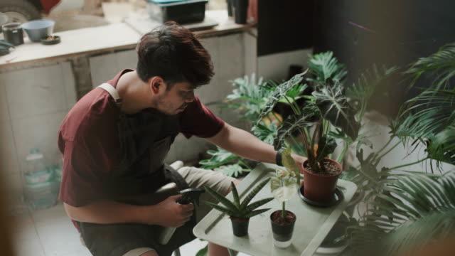 florist man seedling plants at home - gardening stock videos & royalty-free footage