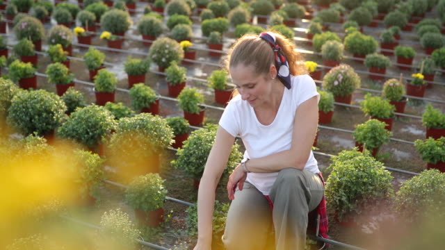 花の農場で花を植える花 - 造園点の映像素材/bロール