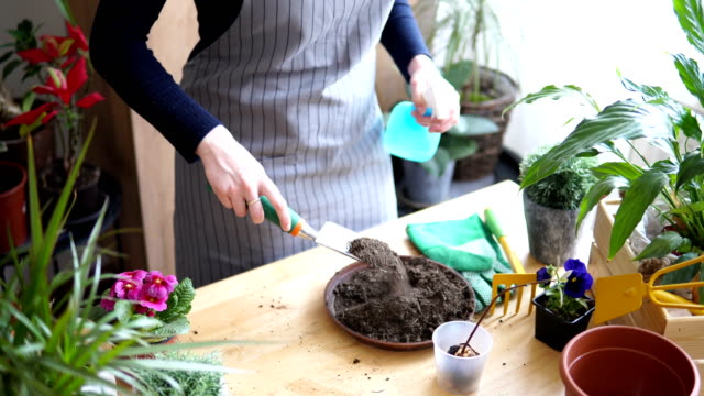 florist woman seedling plants - gardening glove stock videos & royalty-free footage