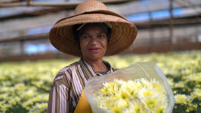 florist woman working at greenhouse at holambra, sao paulo, brazil - brazilian ethnicity stock videos & royalty-free footage