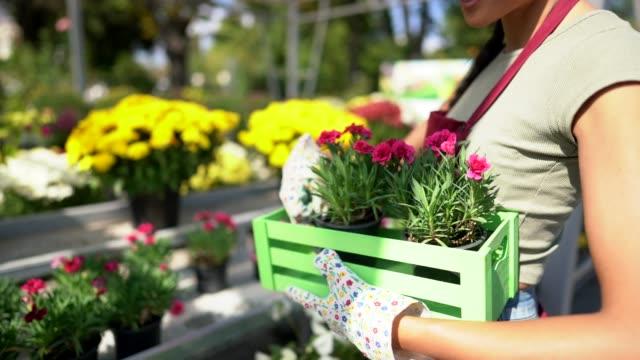 florist woman working in garden center - centro per il giardinaggio video stock e b–roll