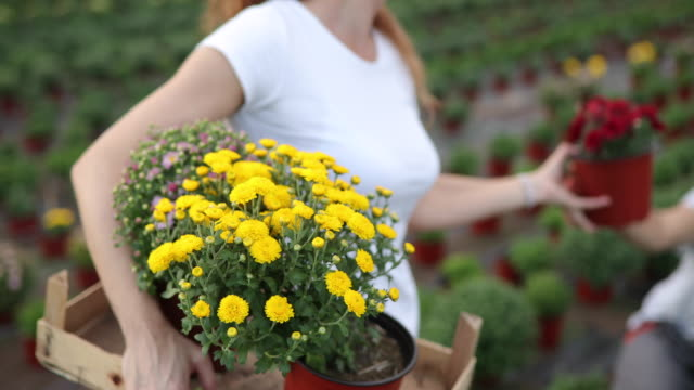 florists with flowers in the crate - plant pot stock videos & royalty-free footage