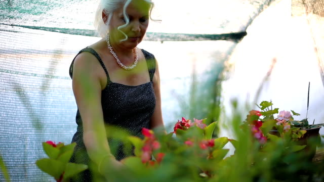 florists woman working with flowers at a greenhouse. - flower shop stock videos and b-roll footage