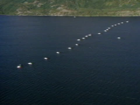A flotilla of boats scan the bottom of Loch Ness during Operation Deepscan in a bid to find the Loch Ness Monster