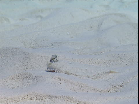 a flounder glides along the sandy seabed. - history点の映像素材/bロール