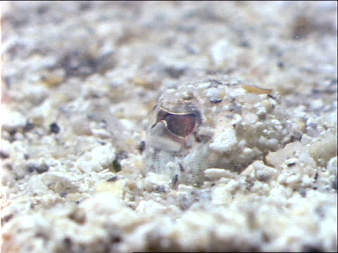 a flounder hides on the ocean floor and looks around with one eye. - flounder stock videos & royalty-free footage