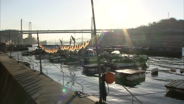 flounders hang to dry in the sun at onomichi harbor. - onomichi hiroshima stock videos and b-roll footage