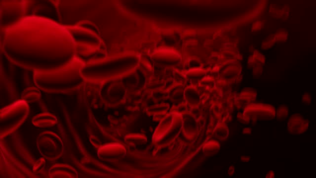flow of erythrocytes - globulo rosso video stock e b–roll