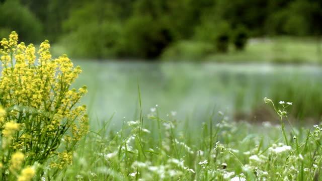 R/F Flower Agains Lake In Mist