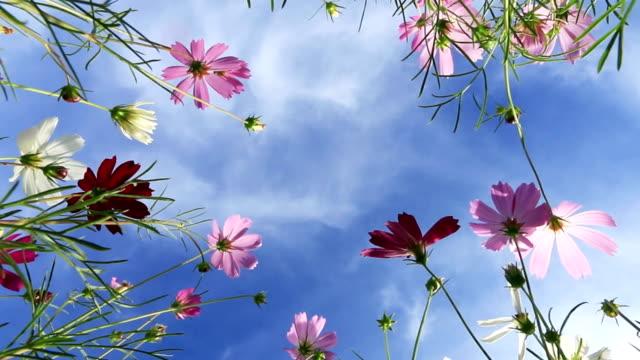flower against beautiful blue sky - below stock videos & royalty-free footage