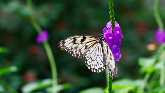 flower and butterfly in slow motion - butterfly stroke stock videos and b-roll footage