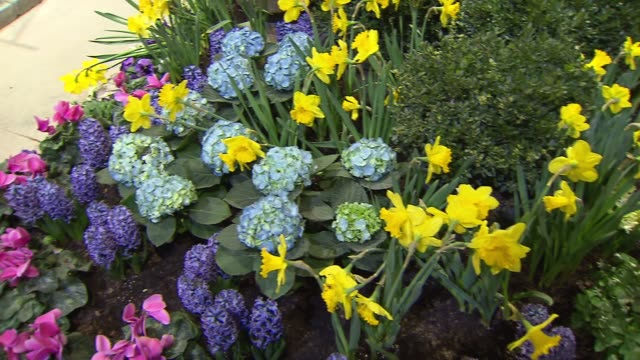 vídeos y material grabado en eventos de stock de flower and garden show at navy pier - hortensia