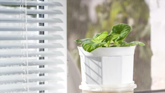 stockvideo's en b-roll-footage met bloem zijn water besproeid. - kamerplant