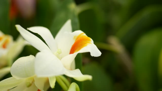 flower background - tropical flower stock videos & royalty-free footage