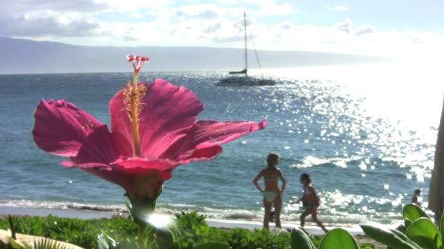 blume beach (hd - eibisch tropische blume stock-videos und b-roll-filmmaterial