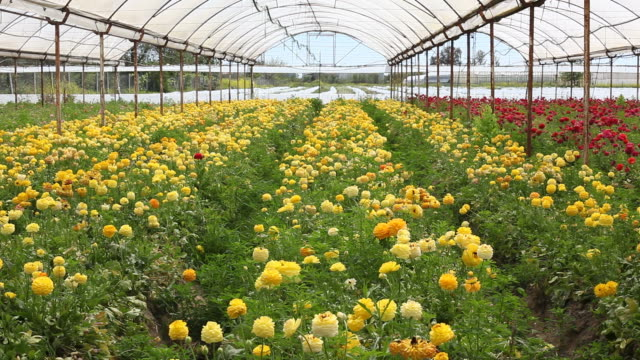Blumenbeet im Gewächshaus