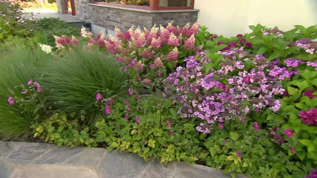 flower bed with hortensias - ranunculus stock videos & royalty-free footage