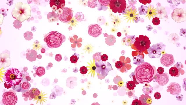 Rosa Blüten ()-Loop