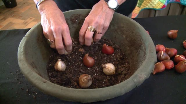 flower bulbs being planted in a pot at the chicago botanic garden on october 26, 2016. - plant bulb stock videos & royalty-free footage