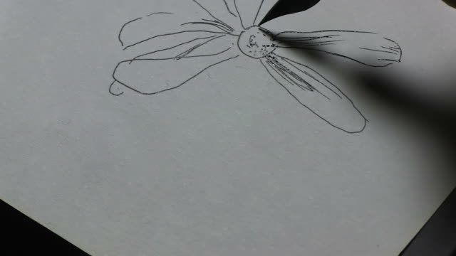 flower drawing - 18th century style stock videos and b-roll footage