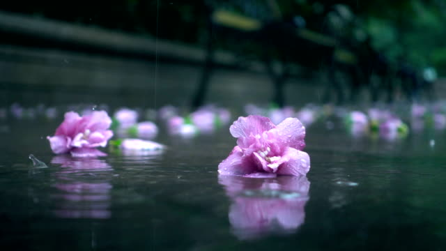 flower falling on the ground in the rain - lying down stock videos & royalty-free footage