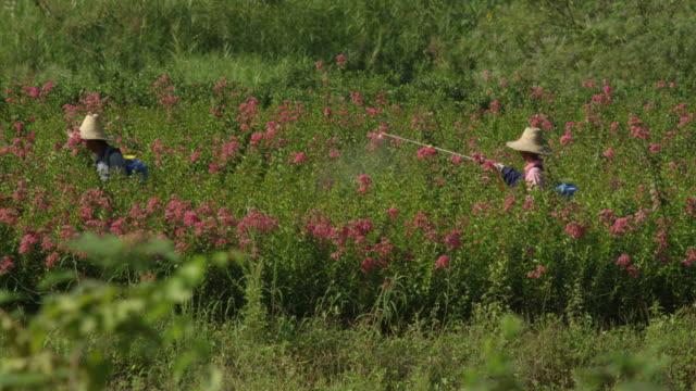flower field being sprayed - fertilizer stock videos & royalty-free footage