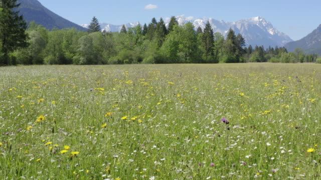 flower field in mountain landscape 1 - meadow stock videos & royalty-free footage