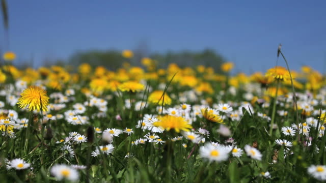 Flower field in spring