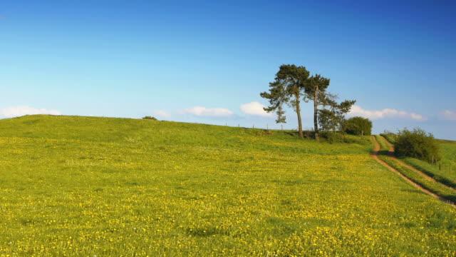 CRANE DOWN: Flower Field
