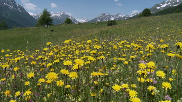 flower field with butterflies, summer in the mountains