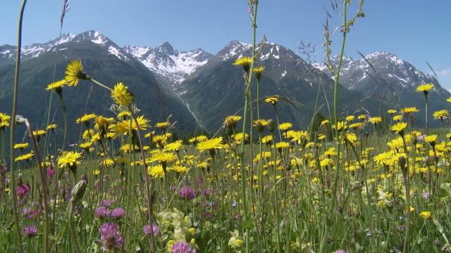 vidéos et rushes de flower field with butterflies, summer in the mountains - plaine caractéristiques de la terre