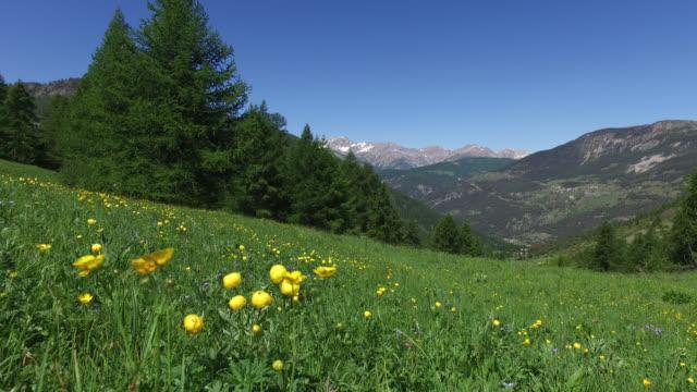 vídeos y material grabado en eventos de stock de flower fields in the mountains in spring - ranúnculo