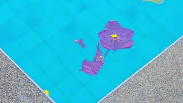 プールに浮かんでいる花。 - 顕花植物点の映像素材/bロール