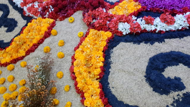 flower garden on sand - rajasthan stock videos and b-roll footage