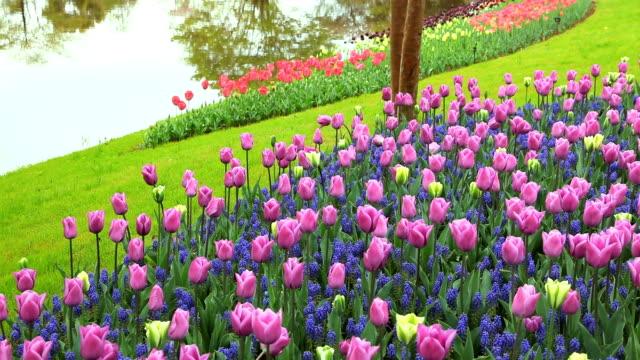 vídeos de stock, filmes e b-roll de flower garden - plusphoto
