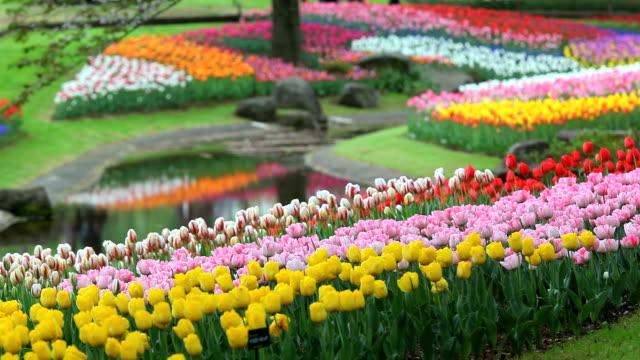 vidéos et rushes de le jardin fleuri - parterre de fleurs
