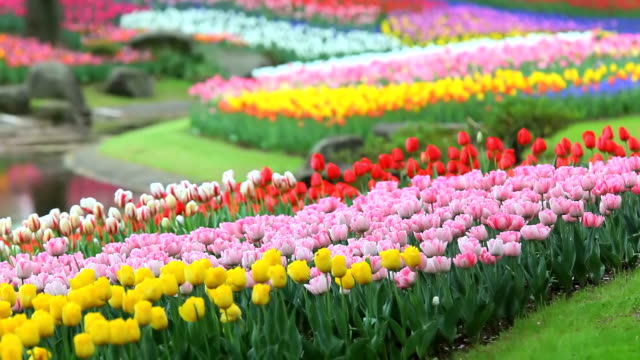 flower garden - gartenanlage stock-videos und b-roll-filmmaterial