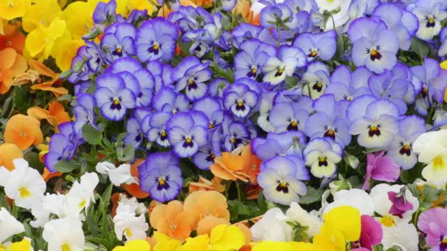 vidéos et rushes de flower garden - parterre de fleurs