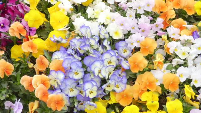 flower garden - flowerbed stock videos & royalty-free footage